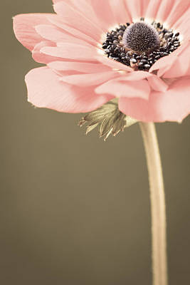 Subdued Anemone Poster
