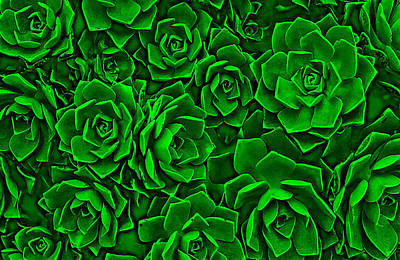 Succulent Green Poster