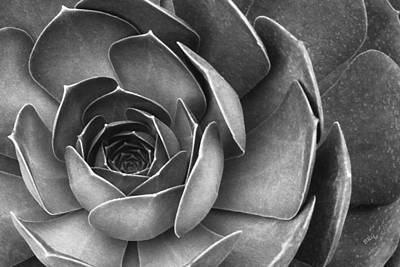 Succulent In Black And White Poster