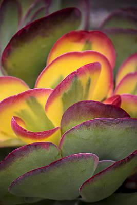 Succulent Light Poster