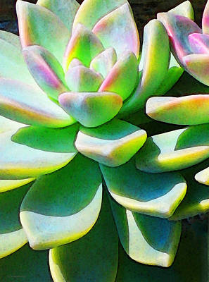 Succulent - Plant Art By Sharon Cummings Poster