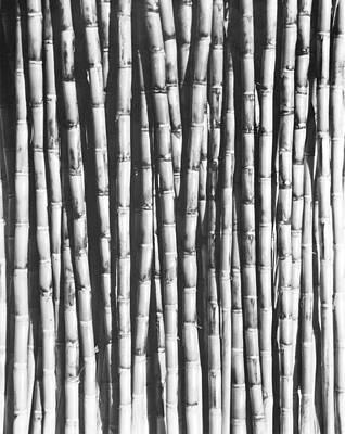 Sugar Cane, Mexico, 1929 Poster by Tina Modotti