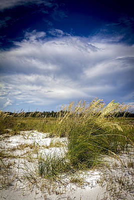 Sugar Sand And Sea Oats Bw Poster by Marvin Spates
