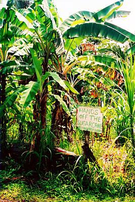 Sugarcane Poster