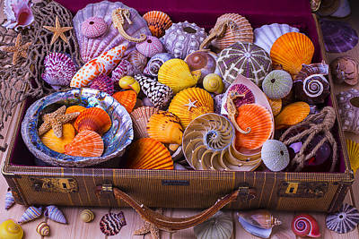 Suitcase Full Of Sea Shells Poster