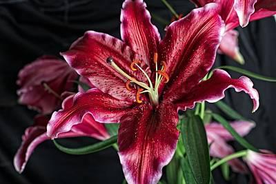 Sumatran Lily Poster