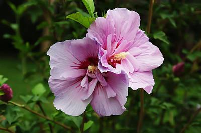 Summer Blossom Poster