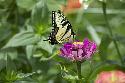 Summer Butterfly Poster