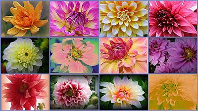 Summer Time Dahlias Poster