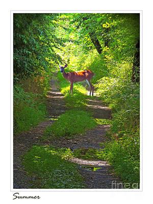 Summer Deer Poster
