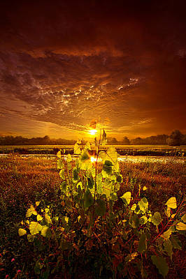 Summer Dreams Drifting Away Poster by Phil Koch