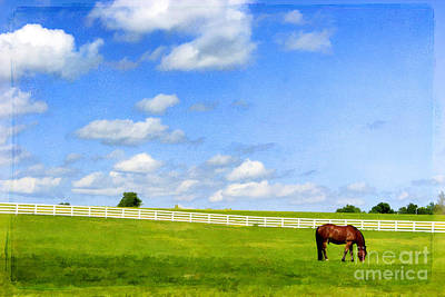 Summer Grazing Poster