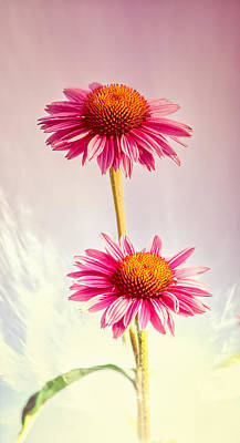 Summer Impressions Coneflowers 2 Poster by Bob Orsillo