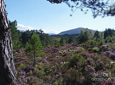 Summer In Abernethy Forest Poster