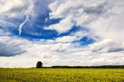 Summer Landscape With Cornfield Blue Sky And Clouds On A Warm Summer Day Poster