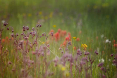 Poster featuring the photograph Summer Meadow by Ellen Heaverlo