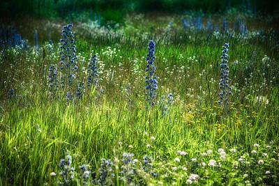 Summer Meadow Of Wild Flowers Poster by Eti Reid