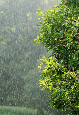 Summer Rain Poster by Norman Pogson