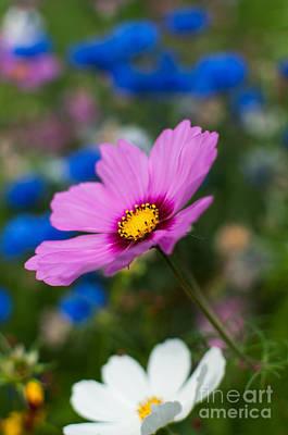 Poster featuring the photograph Summer Wild Blooms by Matt Malloy