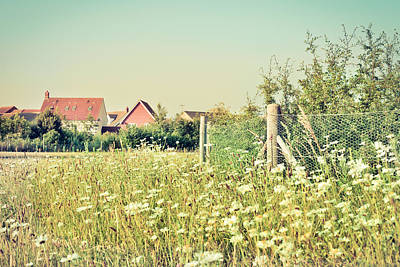 Summer Wildflowers Poster
