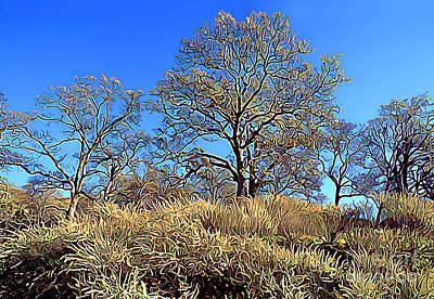 Summertime Oak Trees Poster