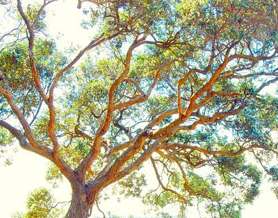 Poster featuring the photograph Summertime Tree by Jocelyn Friis