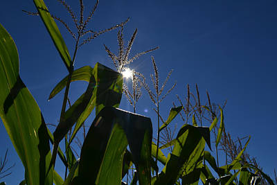 Sun Above The Corn  Poster by Lyle Crump
