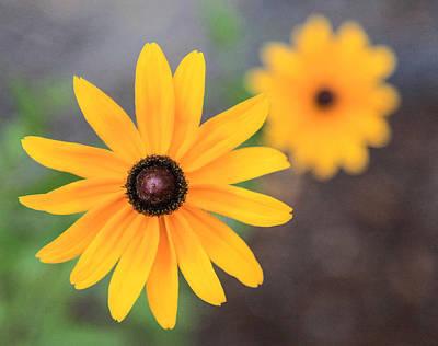 Sun Daisy Poster