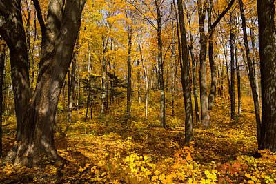 Sun Dappled Autumn Forest  Poster