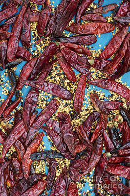 Sun Dried Red Chilli Peppers Poster by Tim Gainey