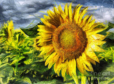Sunflower Drawing  Poster