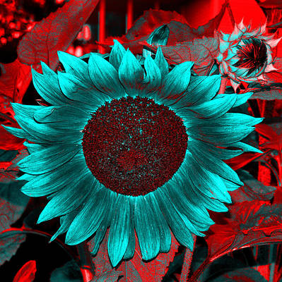 Sun Flower Reverse Poster