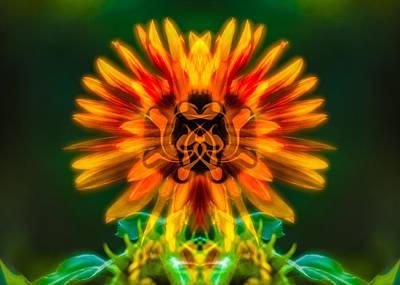 Sun Flower Rising Poster
