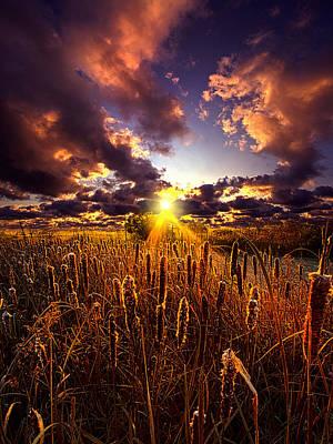 Sun Gazing Poster by Phil Koch
