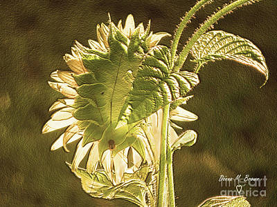 Poster featuring the photograph Sun-lite Sunflowwer by Donna Brown