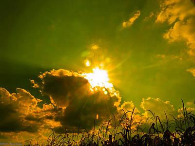 Sun Nest Poster