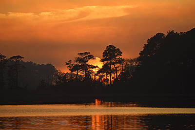 Poster featuring the photograph Sun Setting In Trees by Bill Swartwout