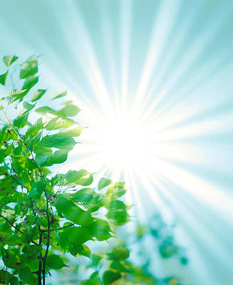Sun Shining Through Leaves Poster by Panoramic Images
