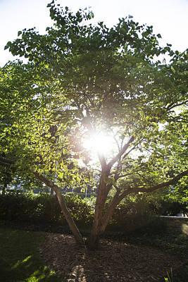 Sun Shining Through Tree Poster by John McGraw