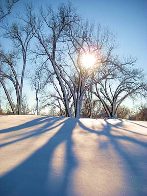 Sun Through Snow Covered Trees Poster