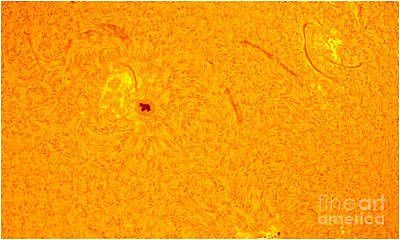 Sun With Sunspots 1710 & 1711, 2013 Poster