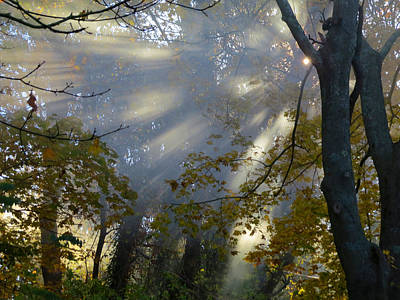 Poster featuring the photograph Sunbeam Morning by Dianne Cowen