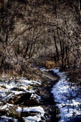 Sundance Aspen Trail V2 Poster by Douglas Barnard