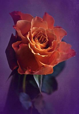 Sunday Rose  Poster by Richard Cummings