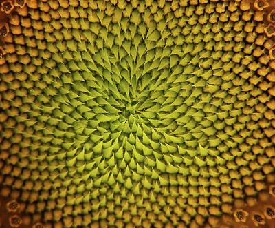 Sunflower Sundial Poster