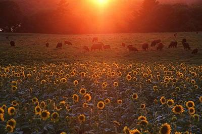 Sundown On Buttonwood Farm Poster