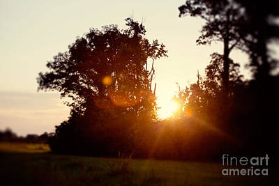 Sunflare Sunset Poster by Erin Johnson