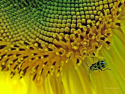 Sunflower And Beetle Poster