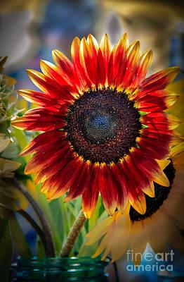 Sunflower Beauty Poster by Robert Bales