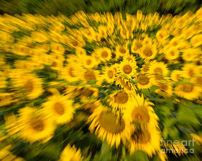 Poster featuring the photograph Sunflower Blur by Dale Nelson